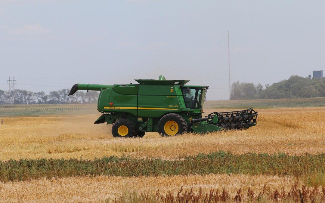 Búza kiadás – Galga-agrár Kft