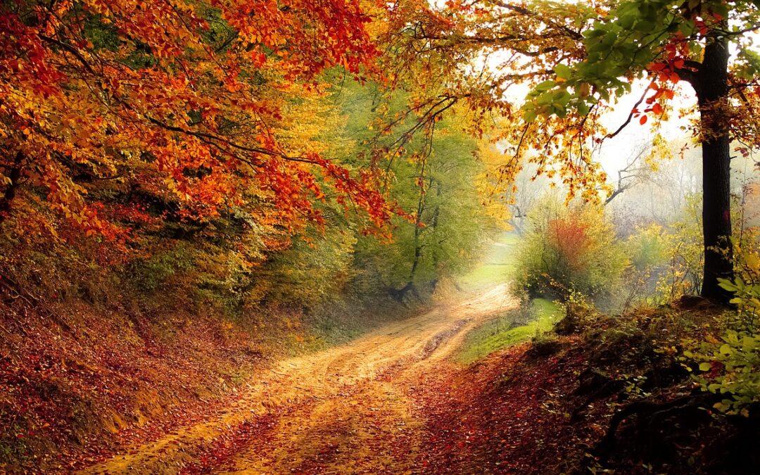 Gödöllői dombság körzeti erdőtervezési eljárás megindítása