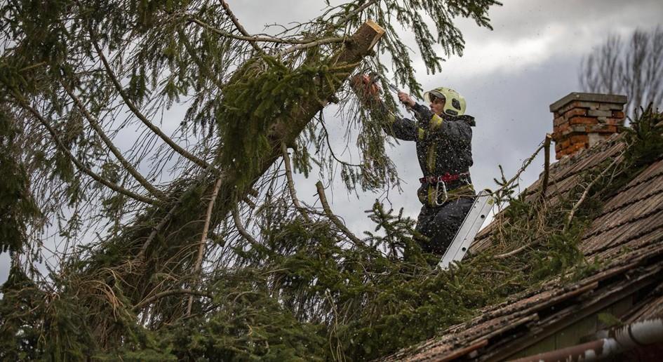 Saját telken vagy a házunk előtt, közterületen lévő fa – Ki felel érte?